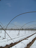 Strawbery coloca a tecnologia Foto de Stock Royalty Free