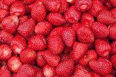 Strawbery fresco Foto de Stock Royalty Free