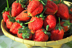 Strawbery. Organic fresh red strawberies Stock Photography