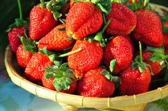 Strawbery with sugar. Organic fresh red strawberies Royalty Free Stock Photos