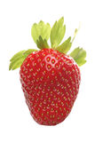 Strawbwrry Royalty Free Stock Photo
