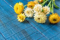 Strawflower & x28; Bracteatum& x29 Xerochrysum; на голубом деревянном столе стоковые фотографии rf
