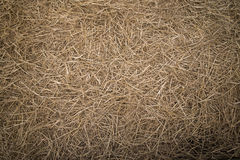 Straws Stock Photo