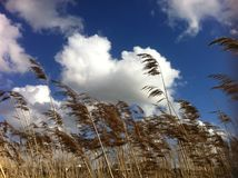 Straws in the clouds  Royalty Free Stock Image