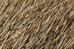 Straws dry reeds background Stock Image