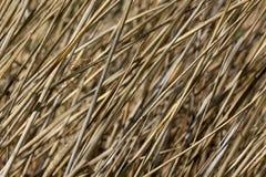 Straws dry reeds background Stock Image