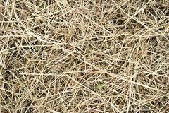 Straws on ground Stock Images