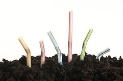 Straws growing out of the ground Stock Image