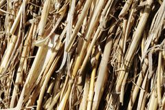 Straws in a hay bale royalty free stock photography