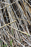 STRAWS TEXTURE Royalty Free Stock Photography