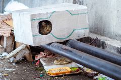 Stray animals in winter, homeless cat sitting on a heating main, homeless frozen cat warms on pipes, people making a house out of Royalty Free Stock Photos