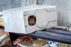 Stray animals in winter, homeless cat sitting on a heating main, homeless frozen cat warms on pipes, people making a house out of Royalty Free Stock Photo