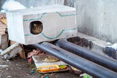 Stray animals in winter, homeless cat sitting on a heating main, homeless frozen cat warms on pipes, people making a house out of Royalty Free Stock Photography