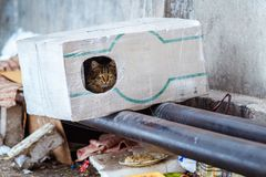 Stray animals in winter, homeless cat sitting on a heating main, homeless frozen cat warms on pipes. People making a house out of a box for a homeless cat Stock Images