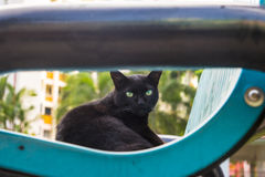 Stray Black Cat looking at the camera Royalty Free Stock Photography