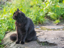 Stray black cat. Selective focus with depth of field stock photography
