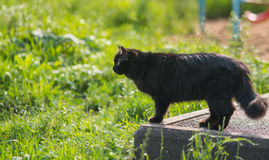 Stray black cat. Selective focus with depth of field royalty free stock photography