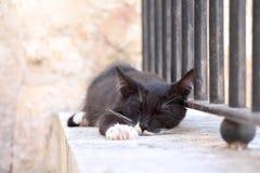 Stray black cat  sleeping outdoors. Stray black cat with white paws and whiskers sleeping outdoors Royalty Free Stock Image