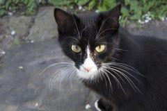 Stray black cat. Stray black and white cat royalty free stock photos