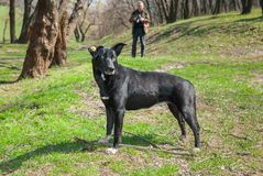 Stray black  dog in park Royalty Free Stock Photo