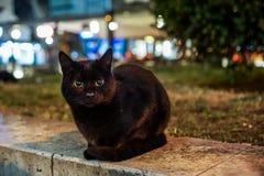 Black cat in city. A stray black at in Split, Croatia Royalty Free Stock Photo