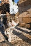 Stray cat Royalty Free Stock Photos
