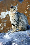 STRAY CAT. One of many cats that life in the harbour in las palmas de gran canaria Stock Photos