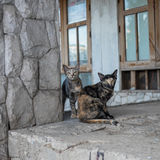 Stray cat in abandon house Stock Photos