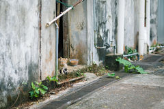 stray cat in a abandoned house Royalty Free Stock Image