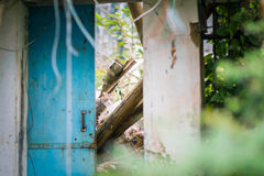 Stray cat in a abandoned house Royalty Free Stock Photos