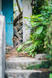 stray cat in a abandoned house Stock Photos