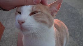 Stray cat stock video footage