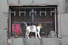 Stray cat arching. Its back. A window in Gran Canaria stock photography