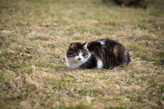 Stray cat. Beautiful stray cat sitting on grass in a garden in springtime Stock Image