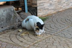 Stray cat being fed at a garden. Stray cat being fed garden animal kind gesture cats kitten cute beautiful stock photography