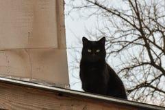Stray cat. Black stray cat on a roof near a hot chimney Stock Photo