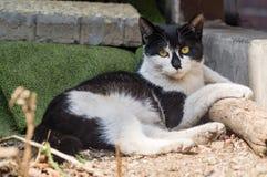 A stray cat Royalty Free Stock Photo
