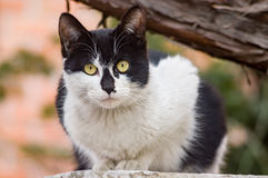 A stray cat. A black-spotted stray cat is sitting and gazing at front Stock Photos