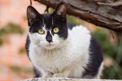 A stray cat Stock Photos