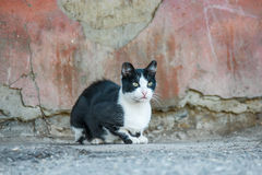 Stray cat. Black and white homeless cat outdoors Royalty Free Stock Photo