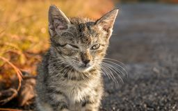 Stray cat blinking eye. And seem messy because have been living in harsh enviroment Stock Photography