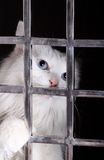 Stray cat in cages. Stray cat in the iron cages Stock Photo