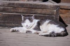 Stray   cat Stock Photography