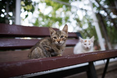 Stray cat Royalty Free Stock Photo