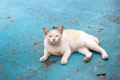 Stray cat on cement ground Stock Image