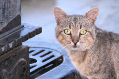Stray cat in close up image Royalty Free Stock Images