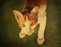 Stray cat close up portrait look up photo Royalty Free Stock Photo