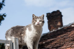 Stray cat closeup. Stray cat on old grunge house background in sunny day royalty free stock images