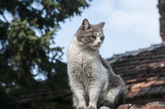 Stray cat closeup. Stray cat on old grunge house background in sunny day stock photography