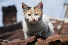 Stray cat closeup. Stray cat on old grunge house background in sunny day Royalty Free Stock Photo